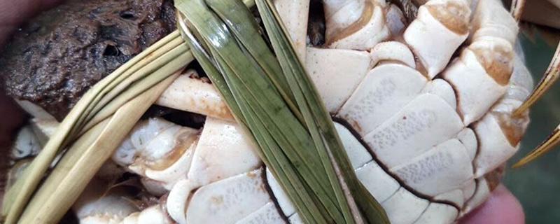 大闸蟹肚皮白的是什么原因