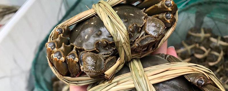 大闸蟹为什么叫大闸蟹