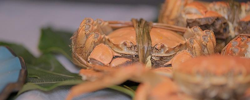 大闸蟹属于海鲜吗