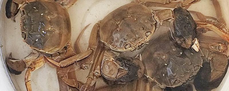 大闸蟹用自来水养可以吗