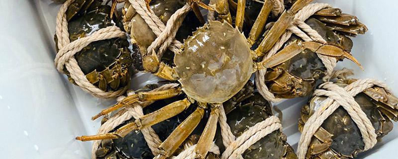 大闸蟹放一晚上会死吗