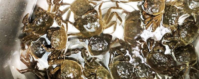 活的大闸蟹怎么保存
