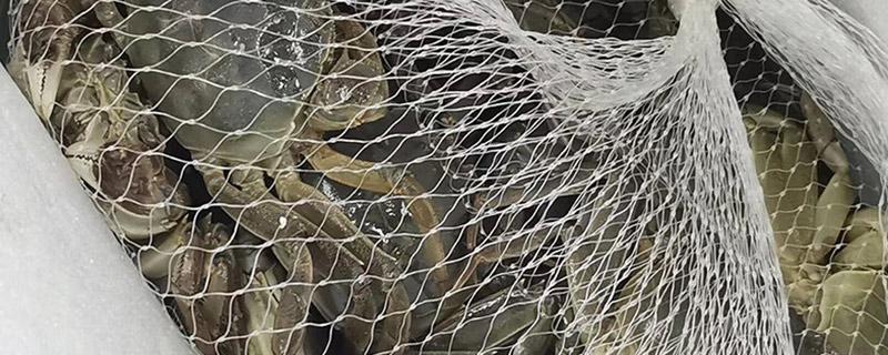大闸蟹可以饿多久
