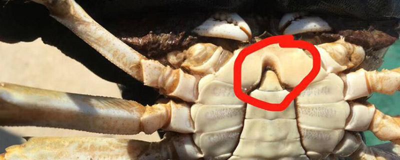 大闸蟹什么叫挂红嘴