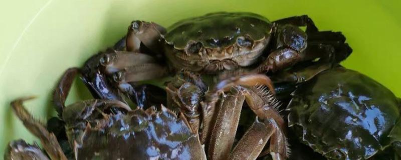 螃蟹怎么保存才新鲜