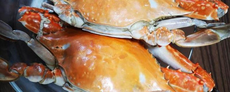 梭子蟹什么时候肥美