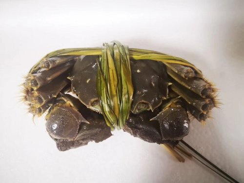 捆绑的如何判断大闸蟹是死是活