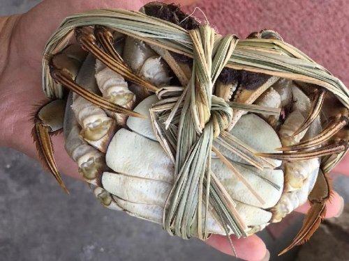 大闸蟹母蟹一般吃多大的