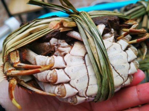 淘宝上购买的大闸蟹靠谱吗?