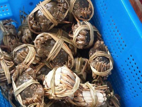 生鲜大闸蟹如何延长寿命