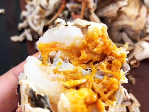 大闸蟹白色透明晶体粘粘的是什么