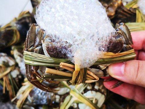 买来的大闸蟹怎么保证鲜活