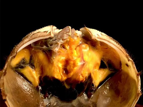 梭子蟹和大闸蟹的区别