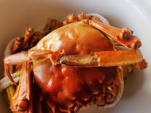清水蟹和大闸蟹的区别