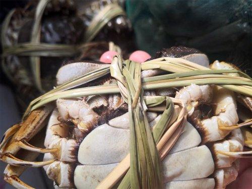 萝卜和大闸蟹能一起吃吗?