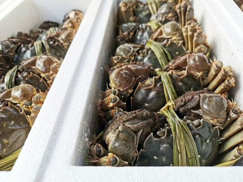 大闸蟹什么季节吃较好?吃螃蟹有哪些讲