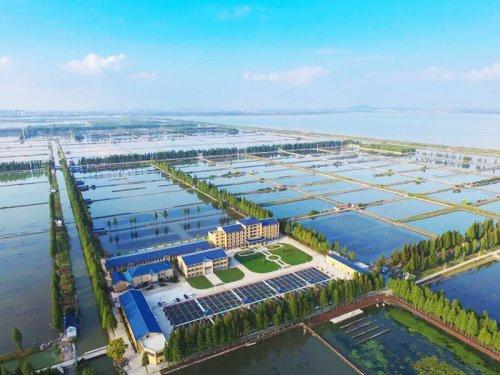 固城湖大闸蟹在哪里