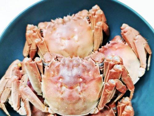 南京大闸蟹几月好吃