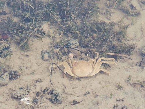 大闸蟹什么时候脱壳