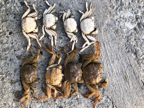 软脚蟹是什么