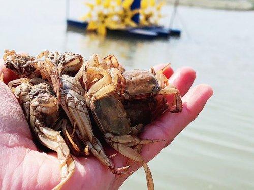 什么是河蟹