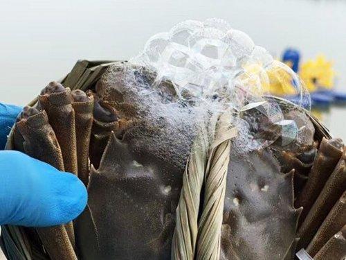 大闸蟹在哪里买