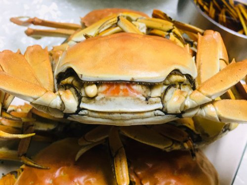 端午节适合吃大闸蟹吗