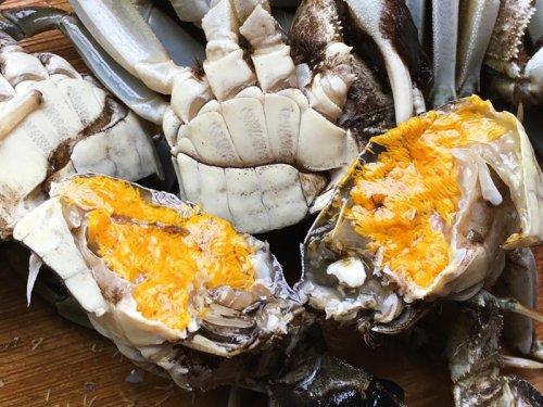 端午的大闸蟹肥美吗