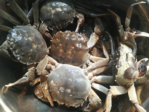 固城湖大闸蟹怎么分辨真假