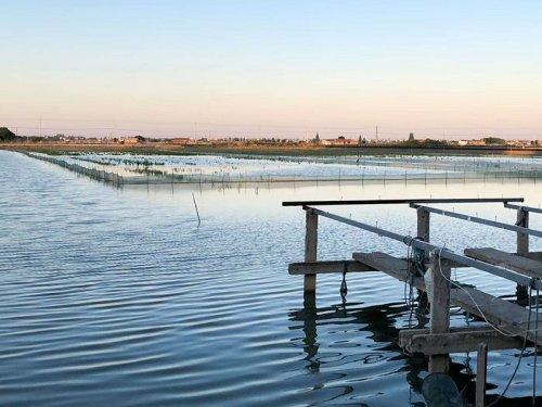养殖大闸蟹需要什么条件