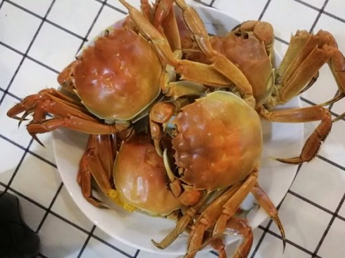 大闸蟹和海蟹的区别