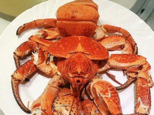 椰子蟹能吃吗