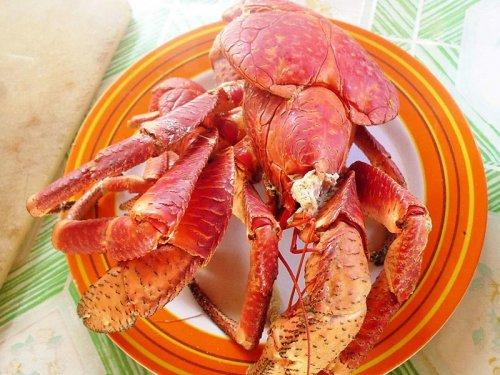 椰子蟹是螃蟹吗