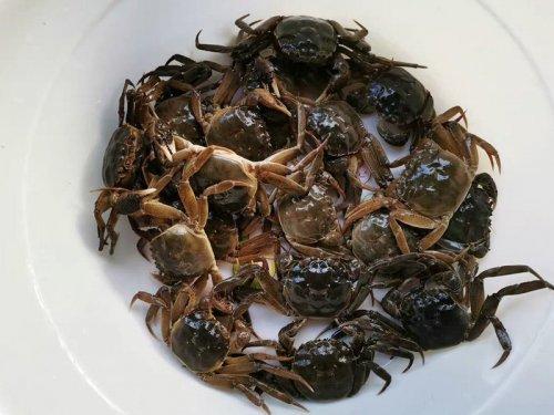 活螃蟹怎么保存过夜