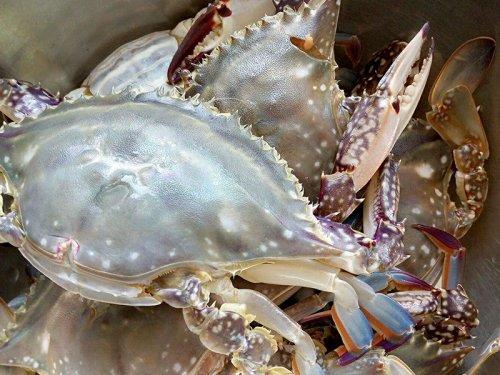 海边岩石里的螃蟹能吃吗
