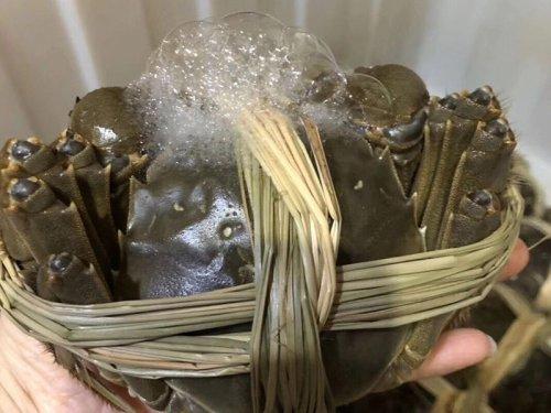大闸蟹的养殖成本是多少