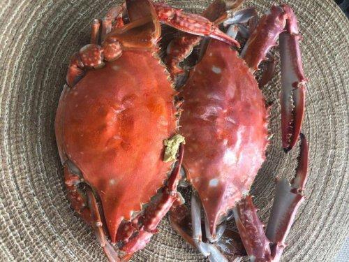 梭子蟹和白蟹的区别