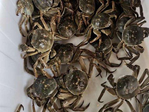 大闸蟹会被淹死吗