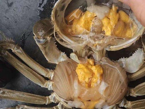 蟹黄是线状像虫一样吗