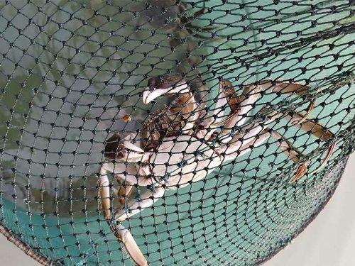 大闸蟹冬天怎么过冬
