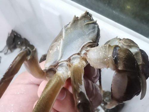 六月黄和大闸蟹哪个好吃