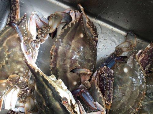 活梭子蟹怎么保存不会死