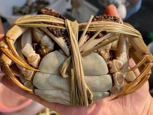 精品蟹和普通大闸蟹有哪些不同